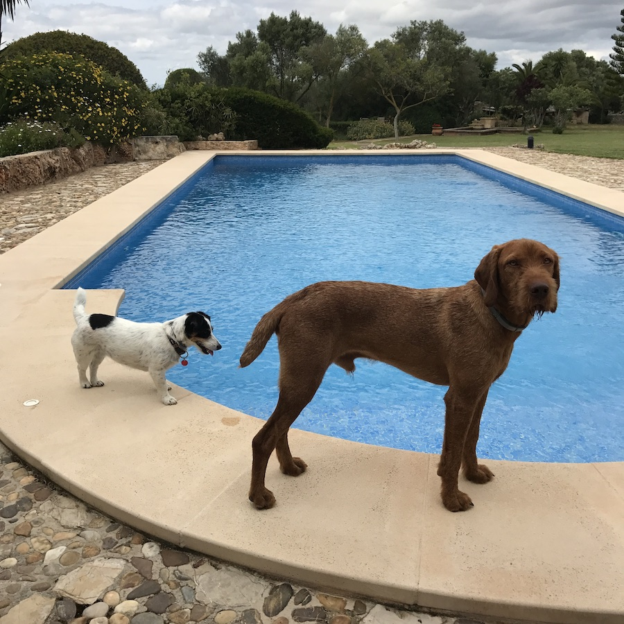 majorca spain pool